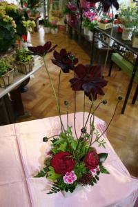 チョコレートコスモ… 「よしむら生花店」 (長崎県南松浦郡新上五島町の花屋)のブログ